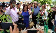 Con festival buscan potenciar exportación de palta de Moro (video)